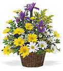 Smiling Spring Basket from Fields Flowers in Ashland, KY