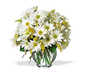 Daisy Cheer from Fields Flowers in Ashland, KY